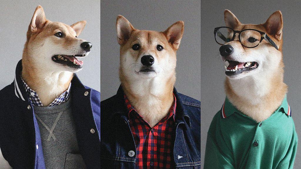 Собака в одежде