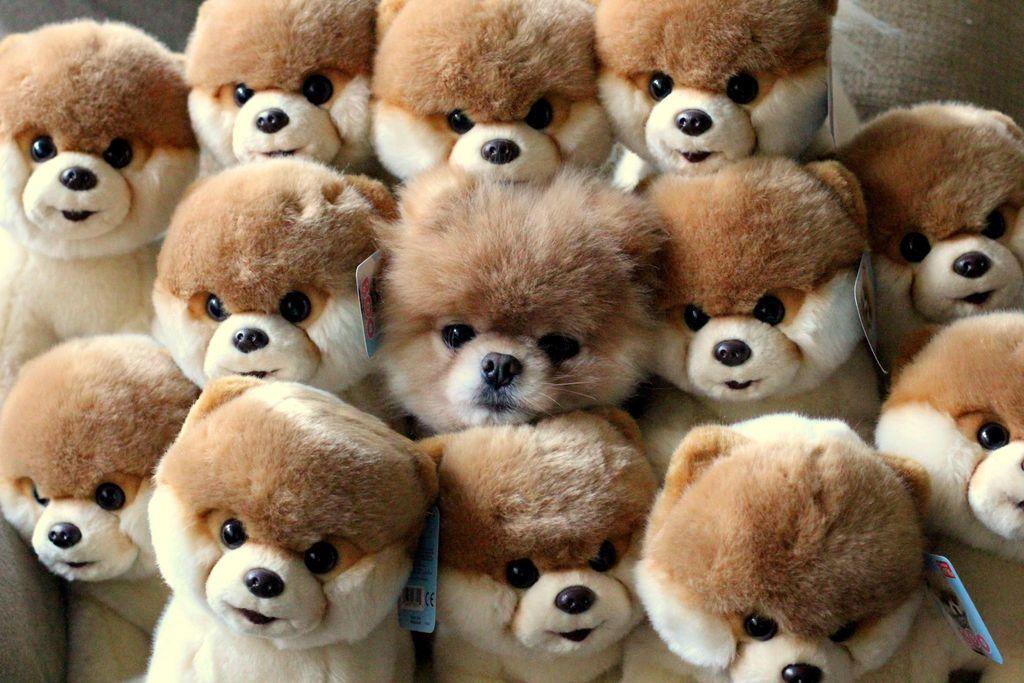 Красивые игрушки и живая собачка