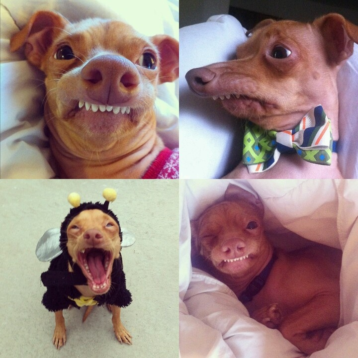Страшнюка рыжик собака
