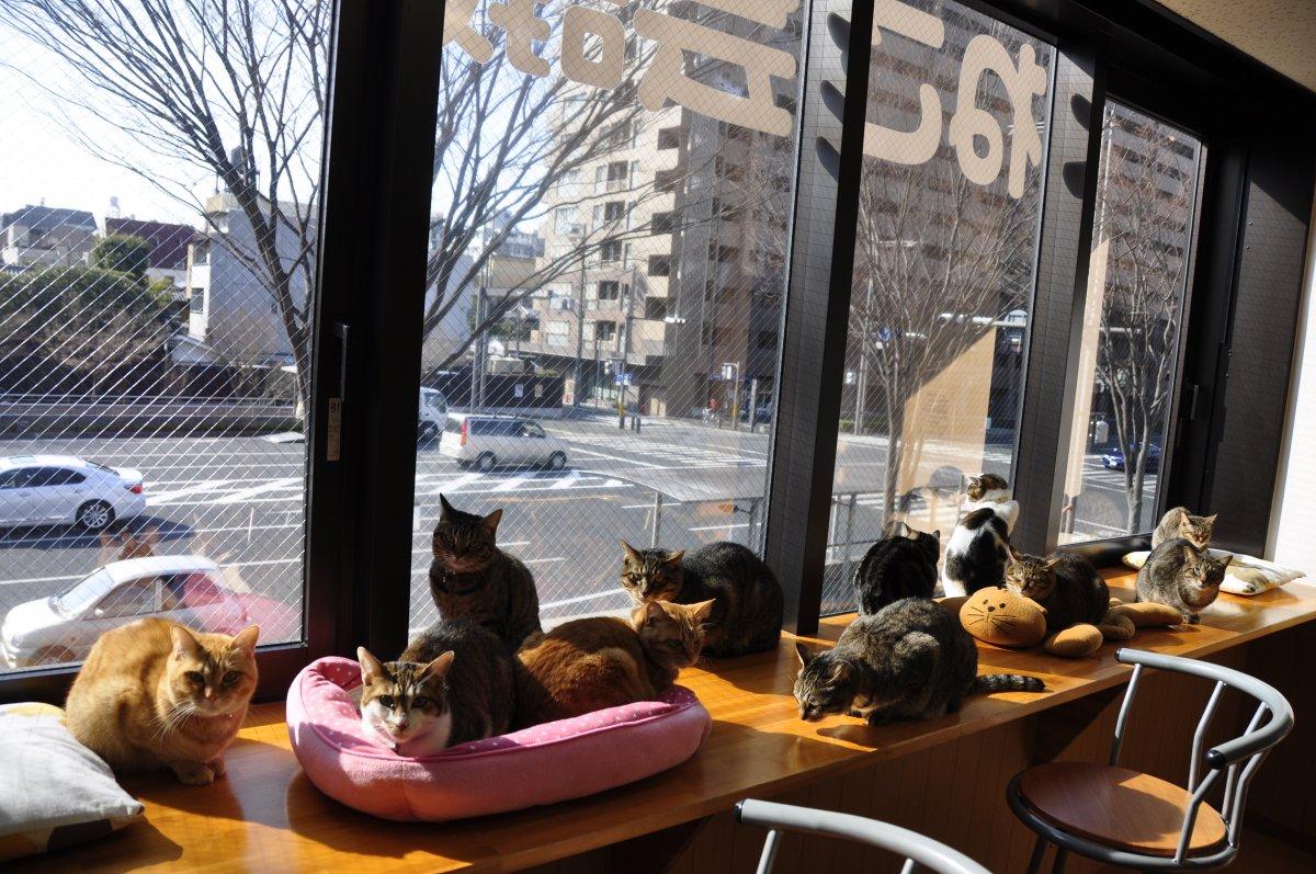Кошки в кафе