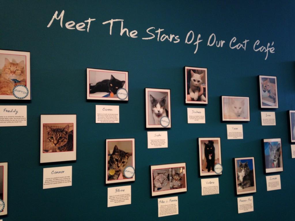 Кошки и люди в кафе