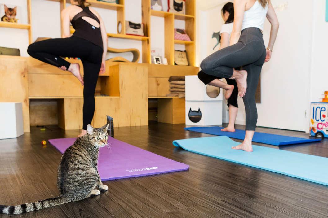 Кошки и йога