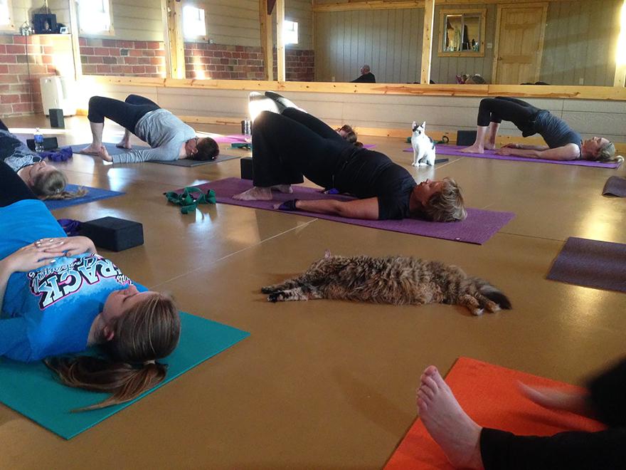 Йога кошки и люди женщины