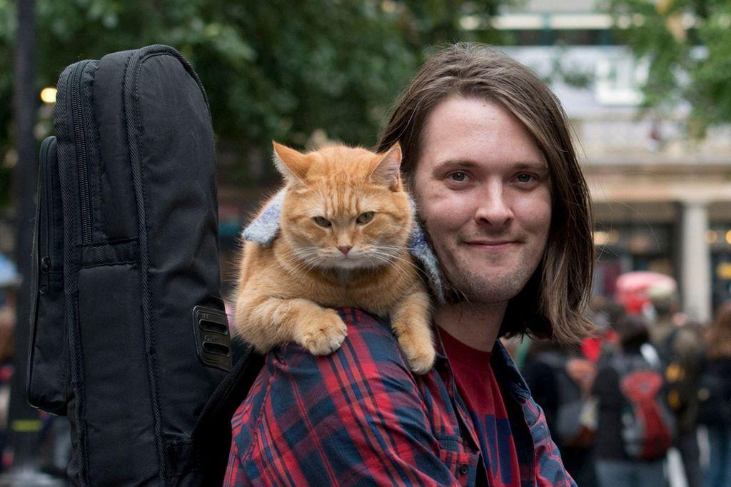 кот на плече парня, мальчика