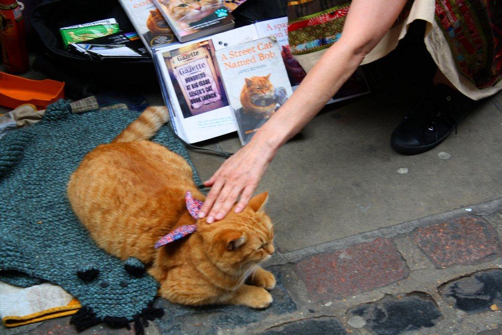 коту показывают книжку