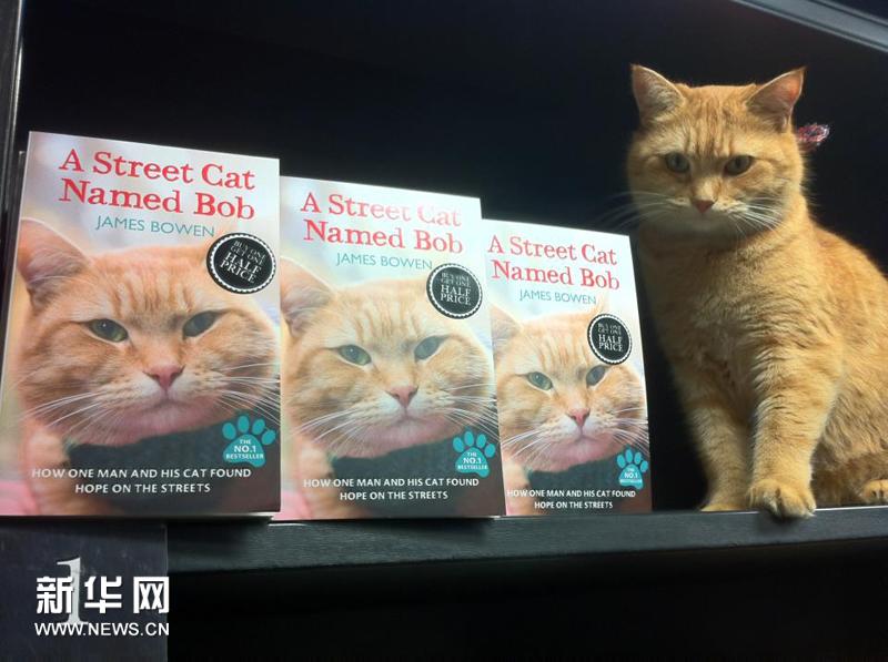 кот и книжки о нем