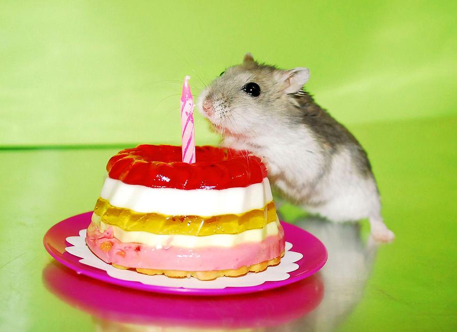 день рождения хомяка торт и хомяк