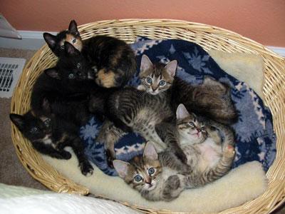 котята без мамы