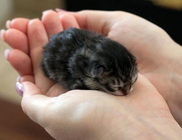 только родившийся котенок