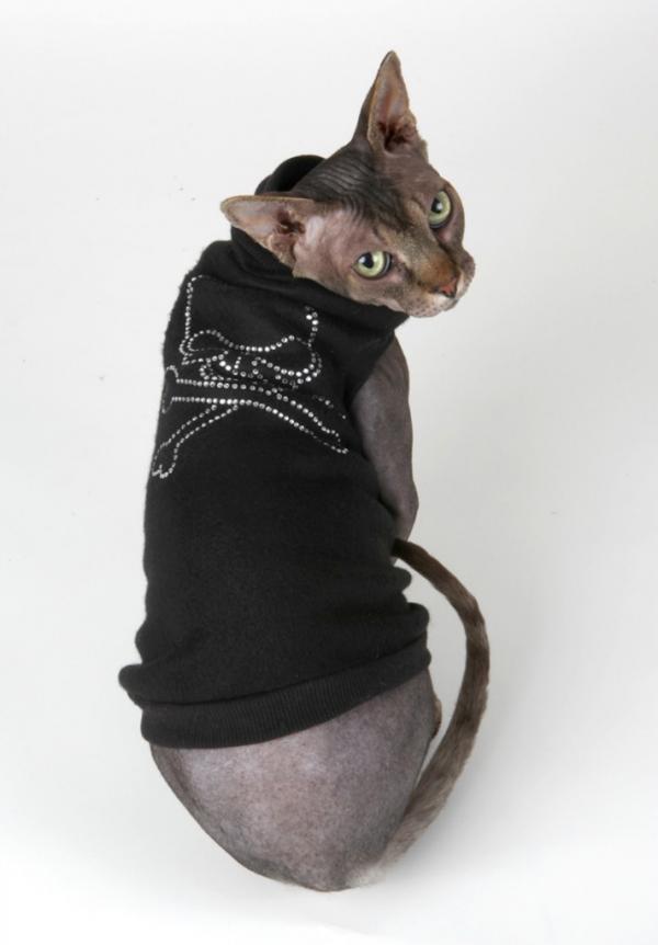 #Модная кошка сфинкс