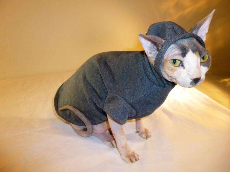 #Кошка-сфинкс в комбинезоне