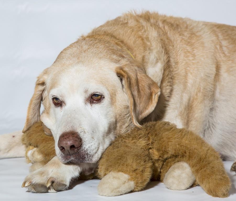 Собака болеет артритом