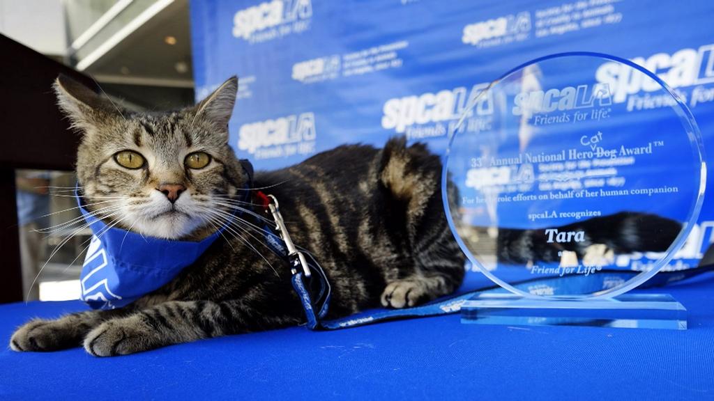 Кошка Тара