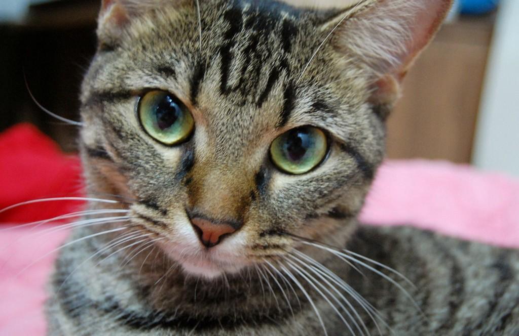 Кошка спасатель Тара Tara