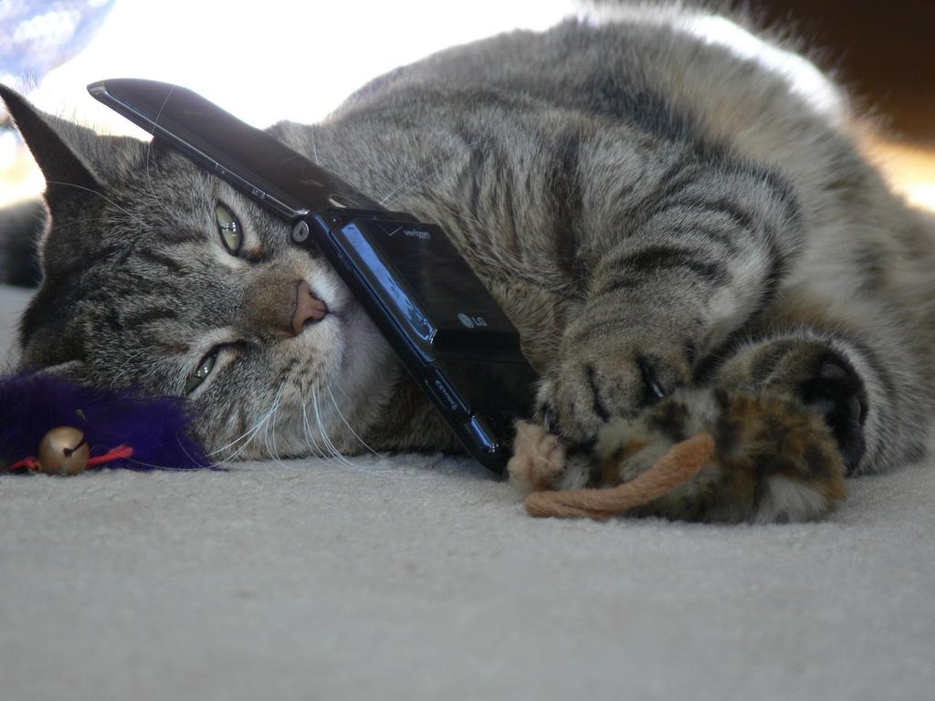 Кот спасатель