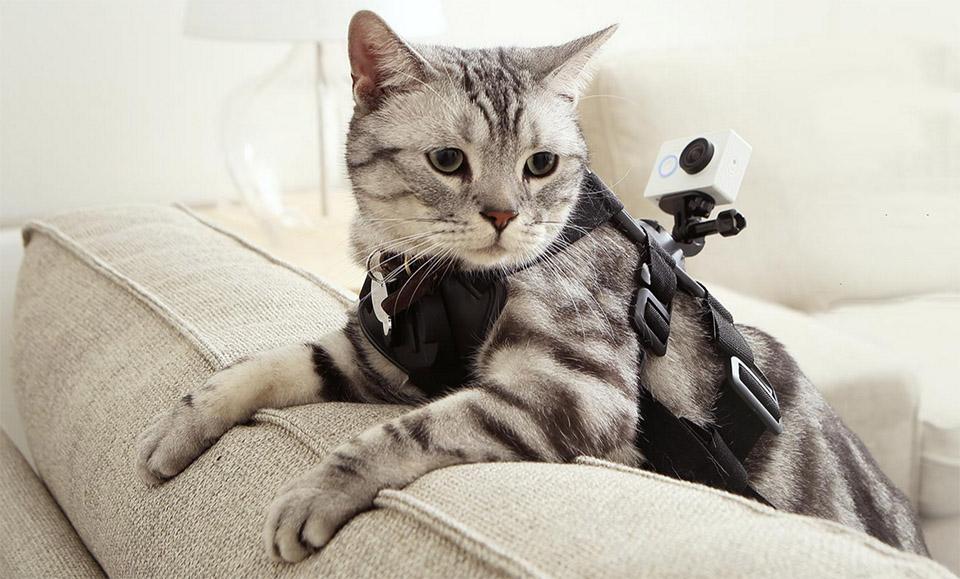 Невероятные случаи с котами