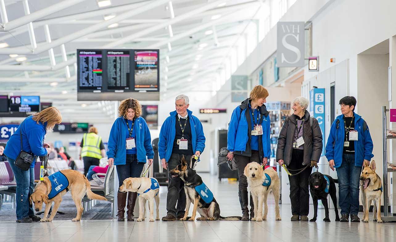 контроль и тренировка собак поводырей