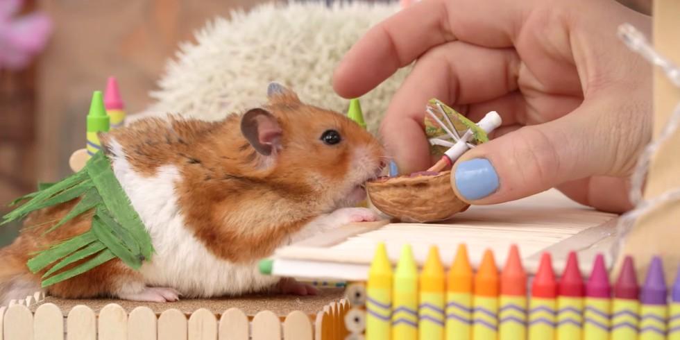 День рождения хомяка кормим его