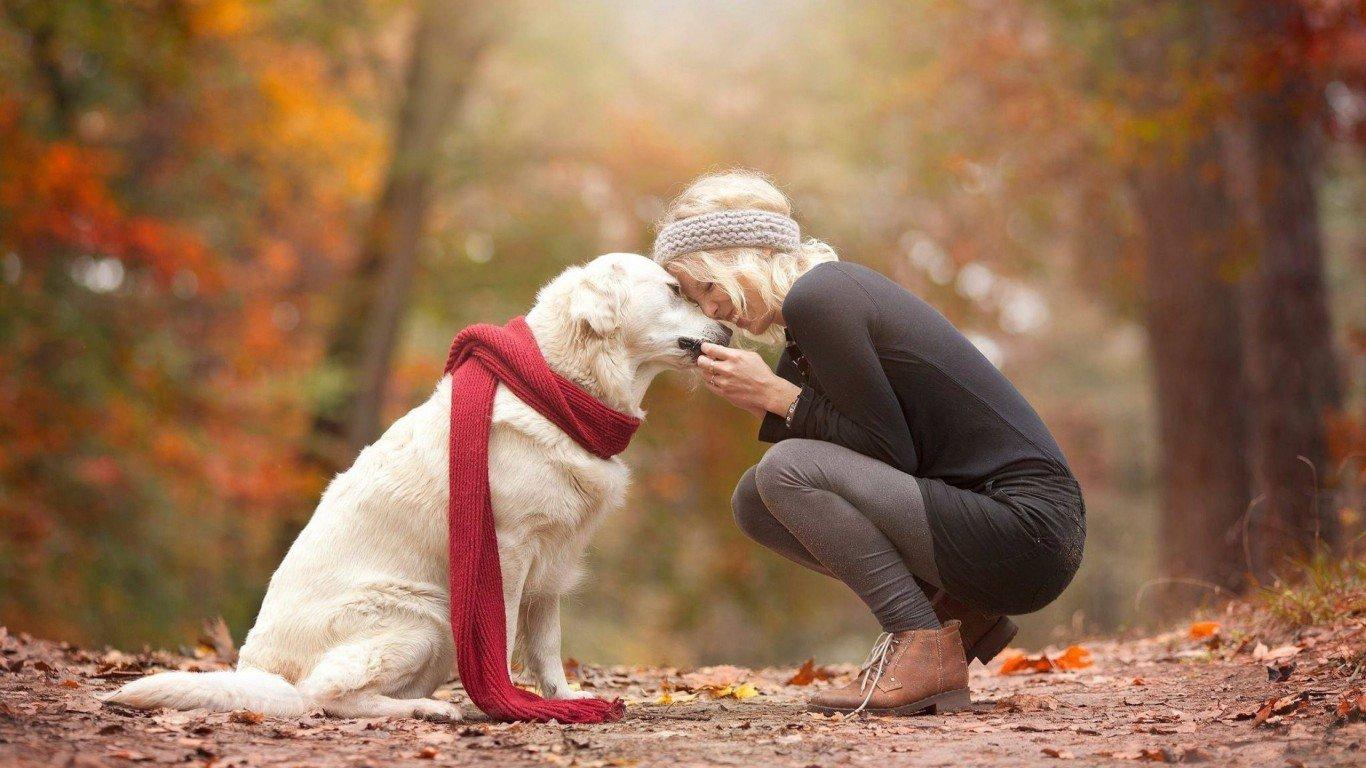 окружите собаку любовью