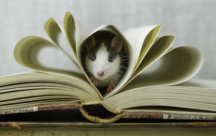 крыска и книжка