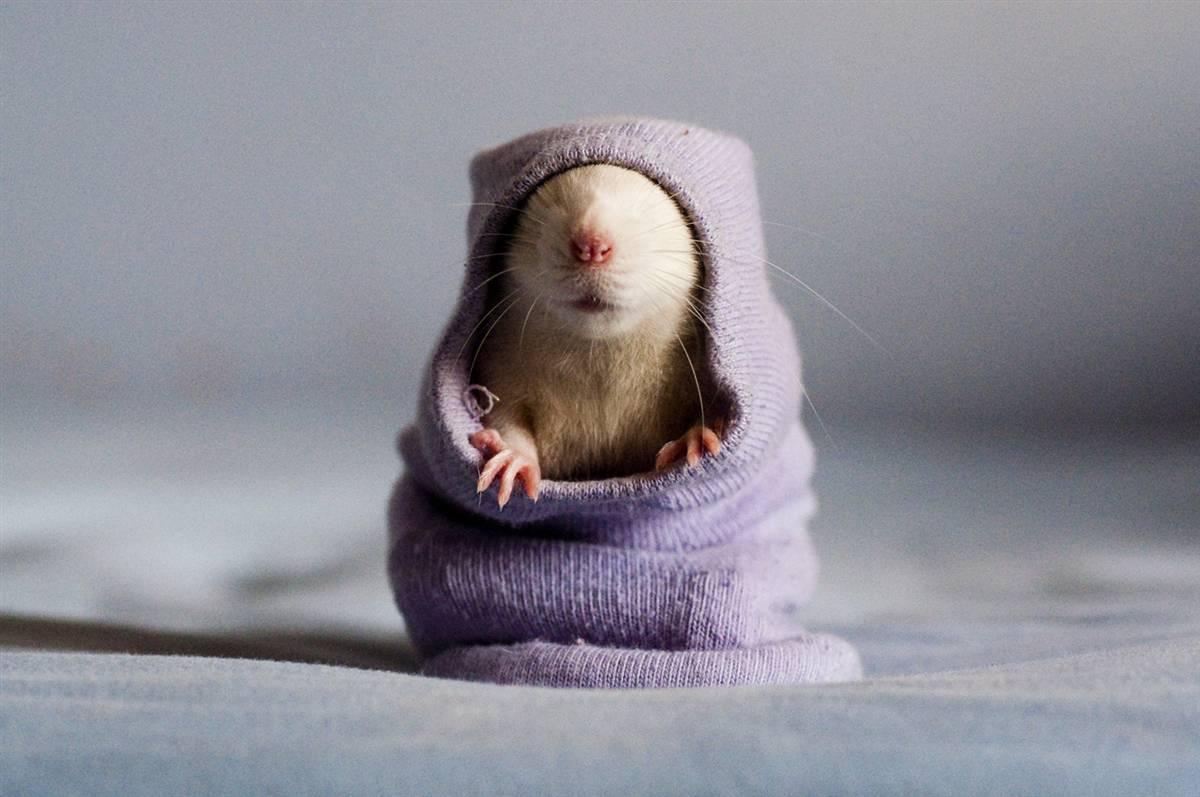Крыска в комбинезоне