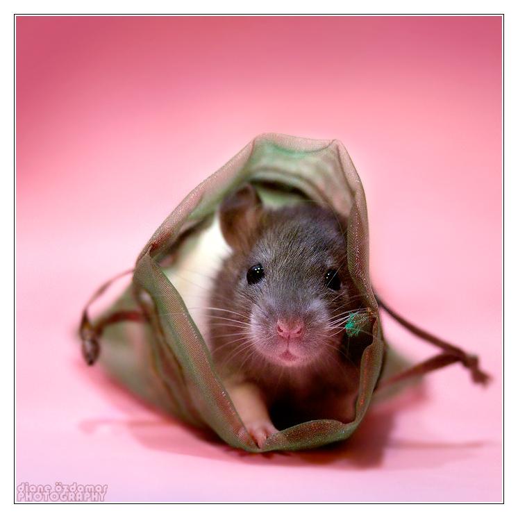 крыска в мешочке