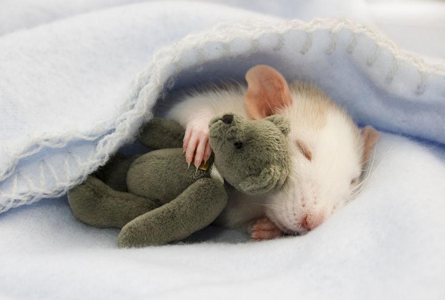 крыска спит с мишкой