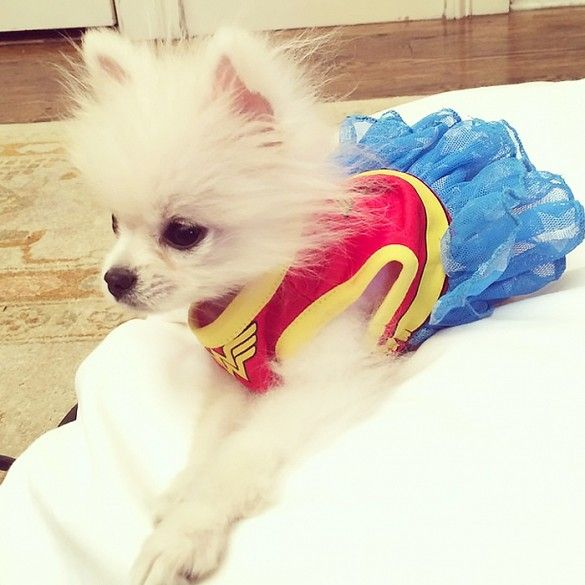 Собака на хэлоуин