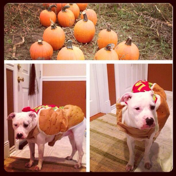 собаки на празднике