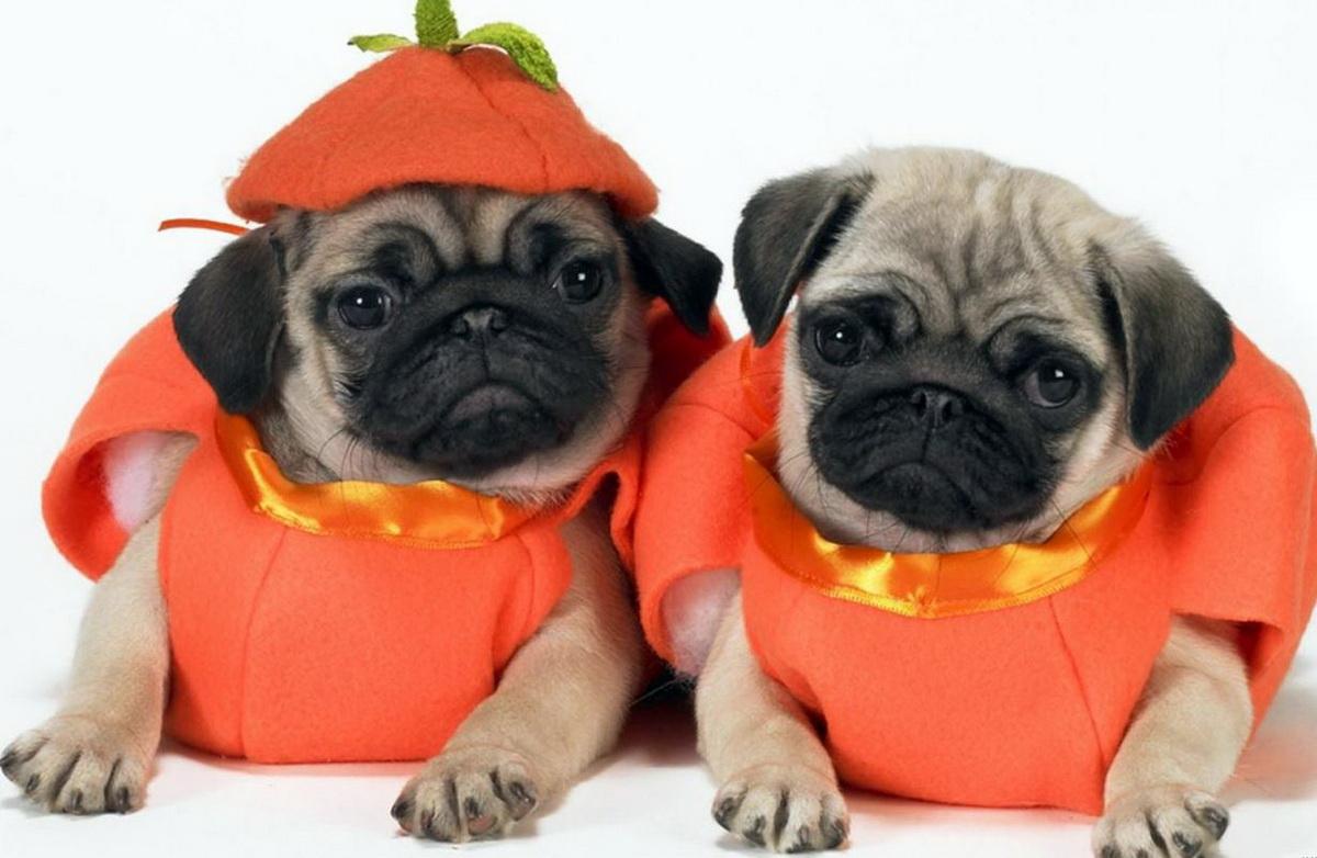 Хэллоуин и животные