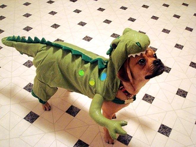 дракоша-собака