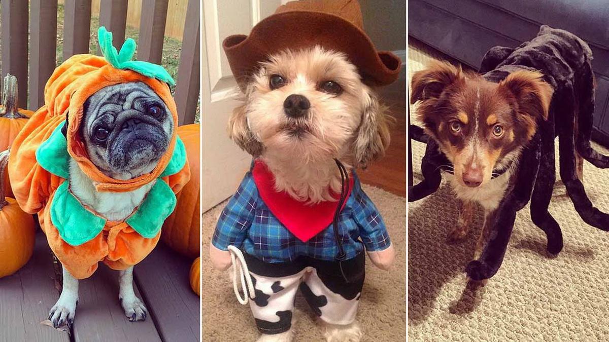 собачки на празднике хэлоуин