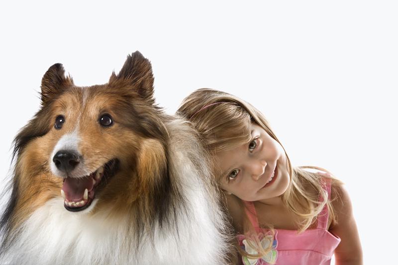 собака колли