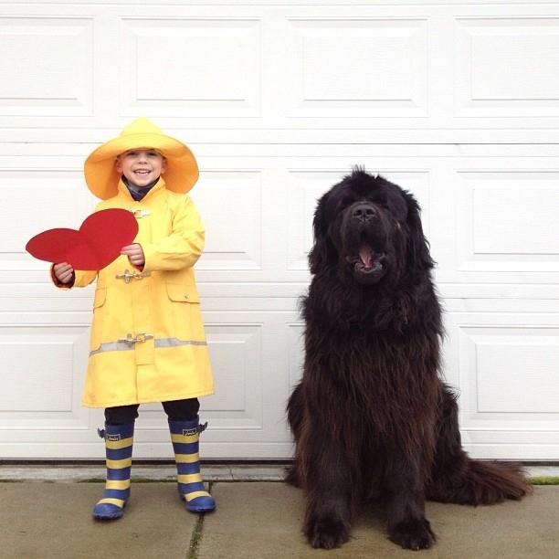 собака ньюфаундленд