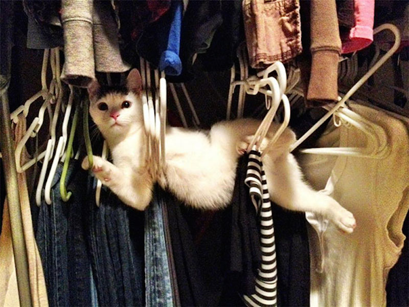 чистка одежды